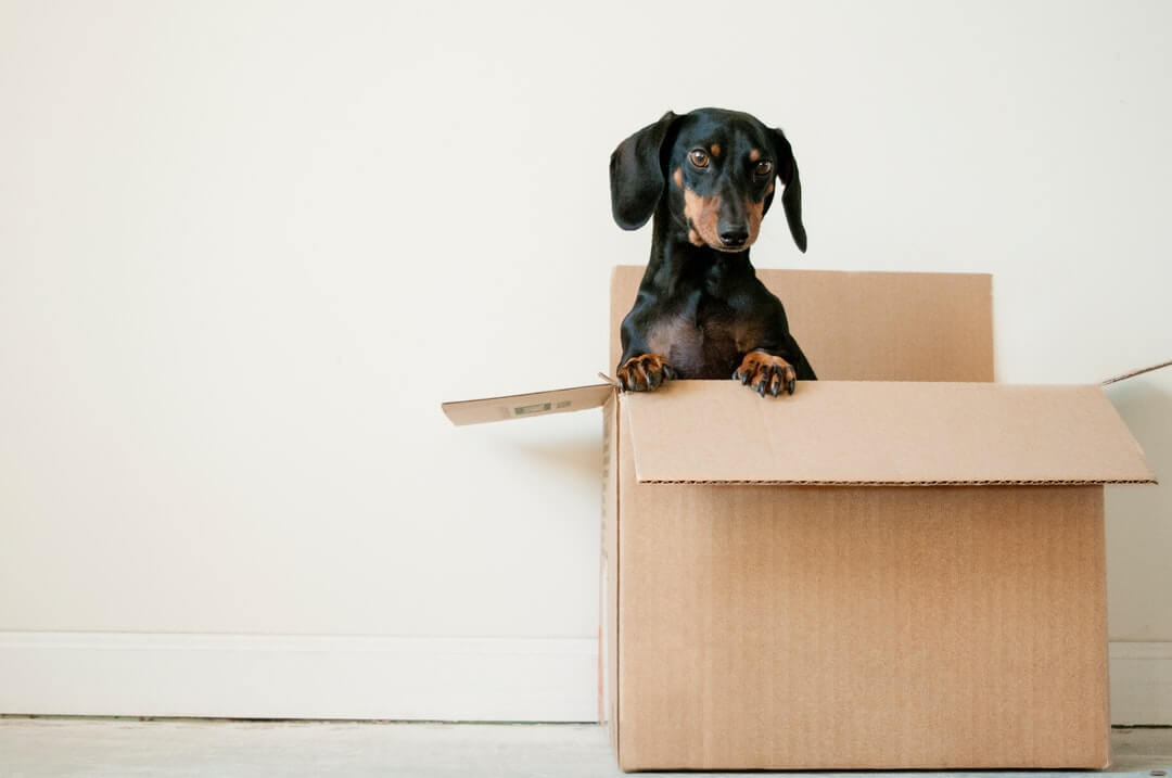 My Brand: Branding Your Moving Company Appropriately